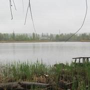 Продажа участка у воды (г. Украинка) фото