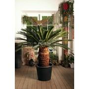 Пересадка комнатных растений. Лечение растений фото