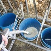 Заменители цельного молока фото