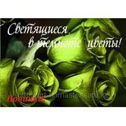 Светящаяся краска для цветов, Усть-Каменогорск фото