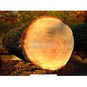 Круглый лес фото