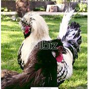 Птицевозы фото