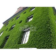 Озеленение вертикальное фото