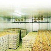Овощехранилища фото