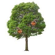 Деревья декоративные фото