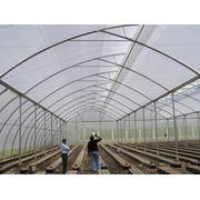 SOLARIG CLASSIC основное парниковое покрытие для туннельных и классических теплиц фото
