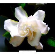 Сеженец цветов фото