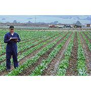 фермерское хозяйство фото