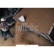 Закупка зерновых и сырья фото