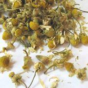 Цветы ромашки аптечной фото