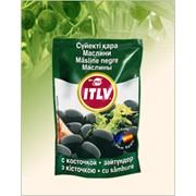 Маслины ITLV черные без косточки фото