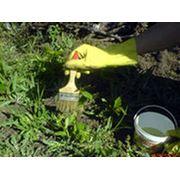 Средства защиты растений фото