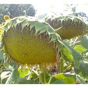 Регуляторы роста растений фото