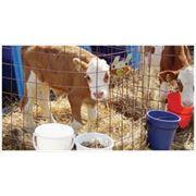 Заменитель молока Виталац C12
