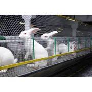 Кролиководство фото