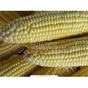 Заготовка сушка хранение калибровка гибридной кукурузы фото