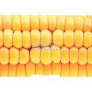 Перевозка сельхозпродукции фото