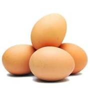 Яйца гусиные фото