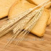 Пшеница на экспорт из Молдова фото