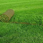 Укладка рулонных газонов в Алматы, Казахстан фото