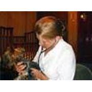 Профилактические ветеринарные мероприятия фото
