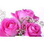 декоративные цветы фото