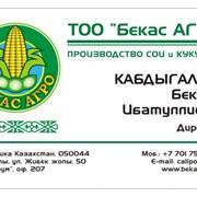 Визитки в Алмате фото
