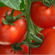 Семена томата высокорослого Комбитомат Тарасенко (20 штук) фото