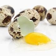 Перепелиное мясо, яйца фото