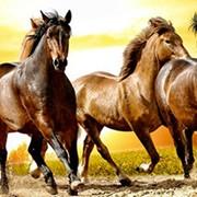 Конные прогулки, Катание на карете, Уроки верховой езды, Групповые и индивидуальные занятия, Катание на пони. Катание на санях зимой фото