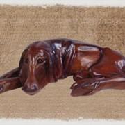 Статуя Собака фото