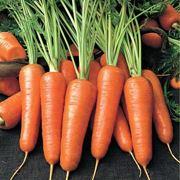 Морковь Курода Шантане фото