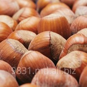 Фундук орехи в Молдове фото