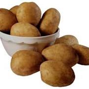 Картофель кормовой Винница, продажа фото