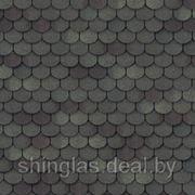 Шинглас Танго Панговый фото