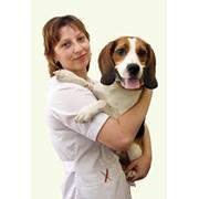 Прием, клинический осмотр животных фото