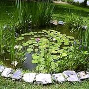 Создание водоемов и бассейнов фото