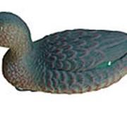 Чучело чирка плавающего (утка) (24 шт./уп.) фото