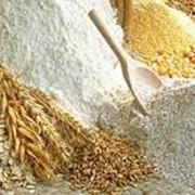 Мука пшеничная первого сорта оптом фото