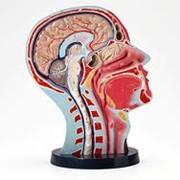 Книги по неврологии фото