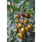 Семена томатов КРИСПИНА ПЛЮМ F1, семена помидор, семена, купить семена, семена оптом фото
