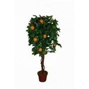 Искусственное дерево Апельсин Смила (Код товара: 56464) фото
