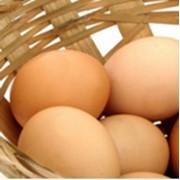 Яйца бройлера фото