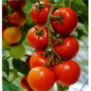 Овощи свежие, экспорт, опт фото