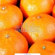 Фрукты цитрусовые. Мандарины фото