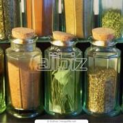 Пряные растения и травы фото