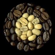 Кофе Арабіка Нікарагуа Марагоджип фото