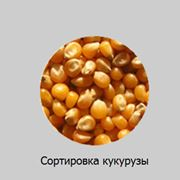 Сортировка кукурузы Производительность: 1т/час* фото
