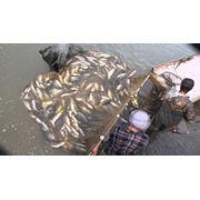 Зарыбление и вылов рыбы в Украине фото
