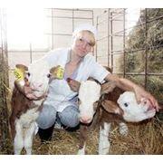 абонентское обслуживание сельхозпредприятий фото